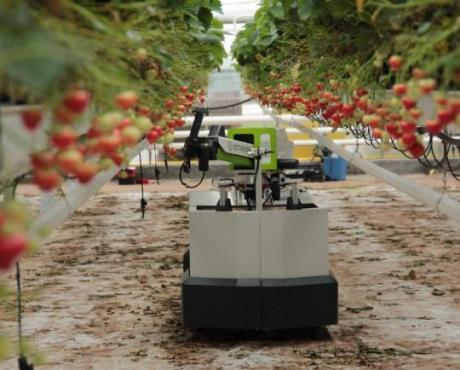 Octinion's Strawberry Picking Robot Rubion